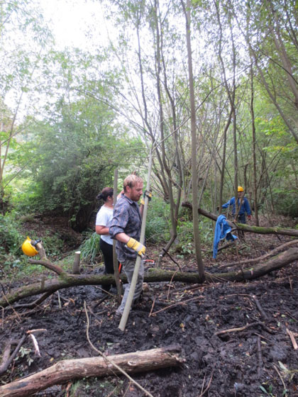 Lye Valley scrub clearing